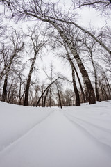 winter forest with trees covered with snow