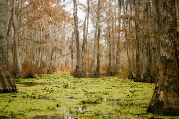 swamp bayou