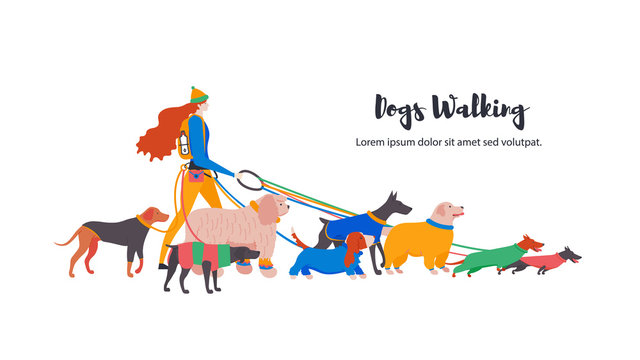 Vector illustration. Set icons of dogs in overalls and personal dog-walker. Different breeds: basset hound, komondor, rhodesian ridgeback, golden retriever, dobermann, weimaraner, dachshund.