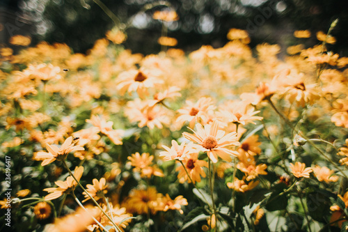 Flowers In May Stock Photo And Royalty Free Images On Fotolia