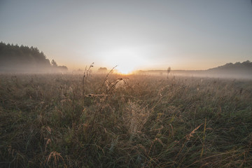 Dawn, morning mist over the meadow, cobwebs in the dew