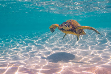 Poster Onder water Sea Turtle swimming in clear water