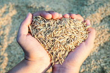 Paddy on hand heart shaped