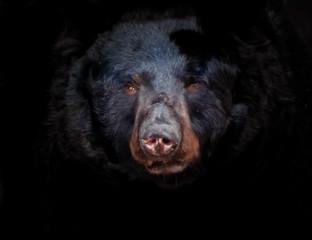 Fotobehang Panter portrait of a bear