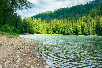 lake among the spruce forest in summer