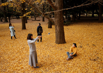 Visitors take photos among ginkgo leaves at Yoyogi park in Tokyo