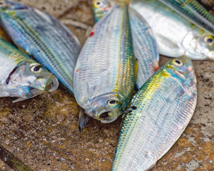 Bait fish on the concrete