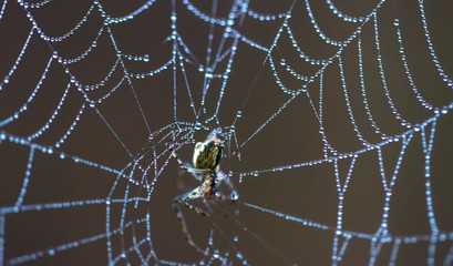 forest spider on the net