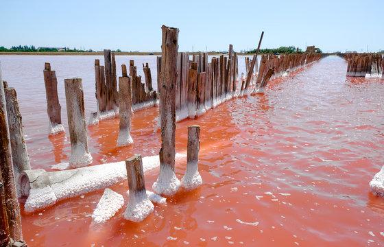 The salty pink lake, Crimea