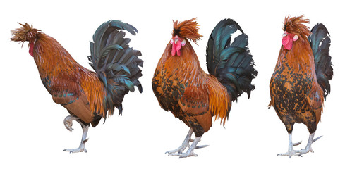 three large orange roosters on white Wall mural