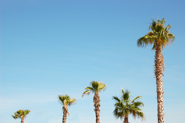 Five palm trees of different heights against the blue sky