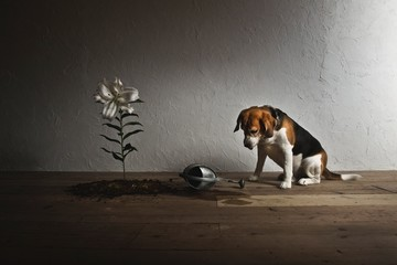 Dog with lily