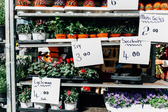Potted plants on shelves for sale