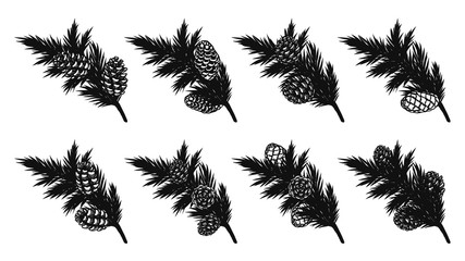 Set of pine leaf silhouette on white background.Black leaf vector by hand drawing