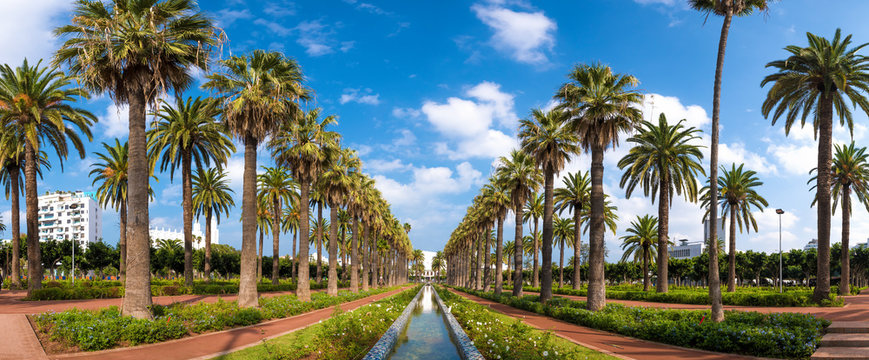 Panorama of Palm trees in The Arab League Park ( Parc de la Ligue Arabe ) in Casablanca, Morocco. Main attraction and beautiful green garden in the center of the city.   next to the Cathedral
