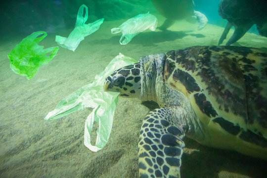 Sea Turtle eat plastic bag ocean pollution concept