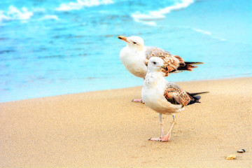 Two seagulls on the sandy seashore. Wild nature. Birds. Place for text.