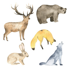 Watercolor forest animals deer bear fox hare and wolf