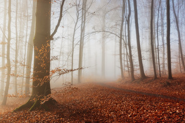 Foto op Canvas Bos in mist Autumn nature. Colored trees in sunlight in forest. Autumn forest. Fall nature.