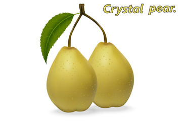 Realistic 3d Chinese pears with leaf, on a white background with realistic shadows. Vector illustration.