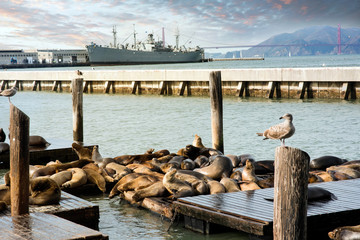 Sea lions at the port of Francisco