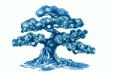 Bonsai tree, Ink drawing.