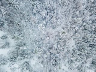 Snow covered trees from above