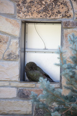 bird in a window