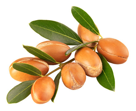 BRANCH OF ARGAN NUTS,CUT OUT