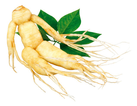 GINSENG ROOT AND LEAVES,CUT OUT