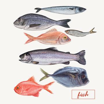 Set of seafood hand drawn illustrations
