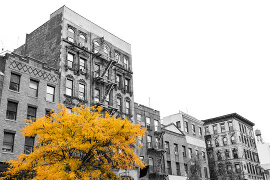 Big yellow tree on the street in front of black and white buildings in the East Village of Manhattan New York City