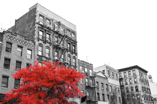 Big red tree on the street in front of black and white buildings in the East Village of Manhattan New York City