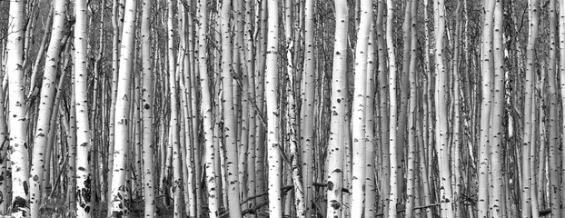 Black and white trees background pattern