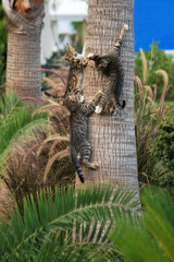 kittens climbing a palm tree in Turkey