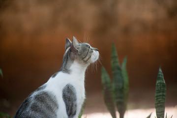 Gato observando uma possível presa
