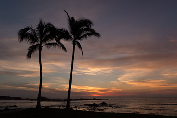 Tropical Palm Trees swaying at sunset on the beaches of Punta Mita, Mexico