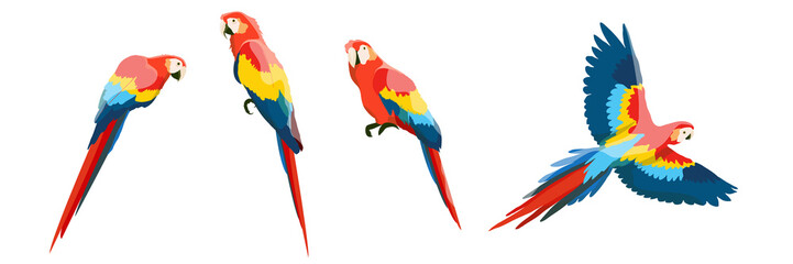 Set of large red-blue macaw parrots. Flying and sitting on the branches of parrots. Wildlife of the jungle and tropical forests of the Amazon. Realistic vector animals isolated on white background. Fotomurales