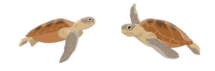 Set of large green soup sea turtles. Reptiles. Wild animals of the seas and oceans. Realistic vector object isolated