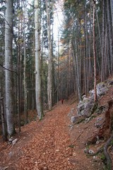 A beech forest in Vorderstoder, Austria, in late autumn. Europe. Background image.