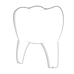 vector, image of one tooth, clean healthy on white background