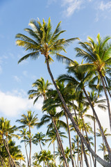 Palm trees and blue sky in a tropical setting