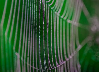 pajęczyna pokryta kropelkami rosy jak perłami o wschodzie słońca