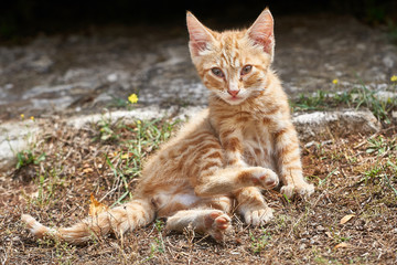 junge neugierige Katze am Wegesrand