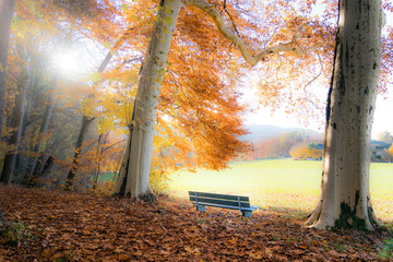autumn in the park, bench at the edge of the forest
