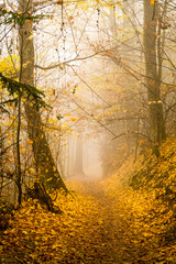 autumn in the park, path in the forest