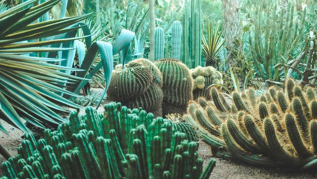 Majorelle gardens and cactus plants in Marrakech