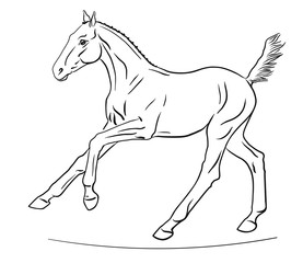 An illustration of a cute cantering foal.