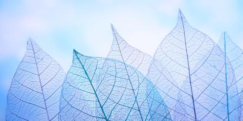 Tuinposter Decoratief nervenblad group of skeleton leaves on blured background, close up