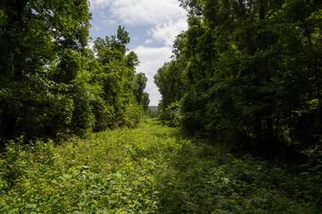 Overgrown Path Through Trees